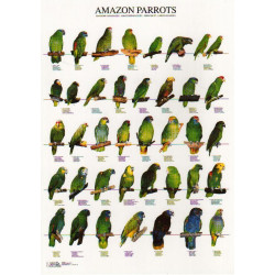 plagát amazoňanov