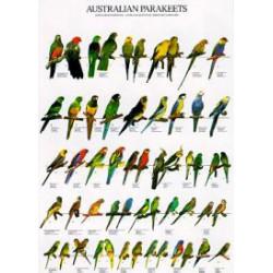 plagát austrálskych papagájov