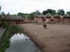 Afrika - zvieratá
