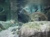 V ponorke - akváriá
