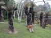 austrálska buš - kengury