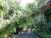 bujná vegetácia