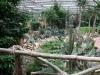 Oasis - teplomilné rastlinstvo
