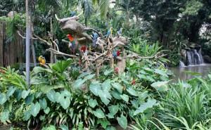 návštevníkov vítajú ary a kakady