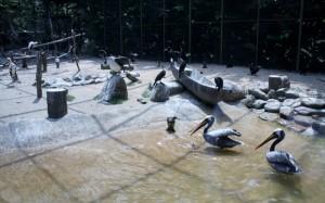 jazierko s umelými vlnami pre pelikány