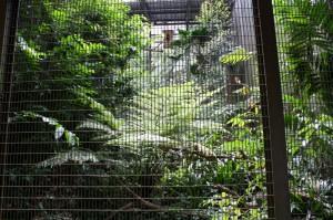 džungľa vo voliérach