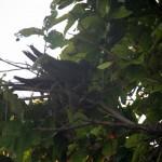 hniezdo vysoko na strome