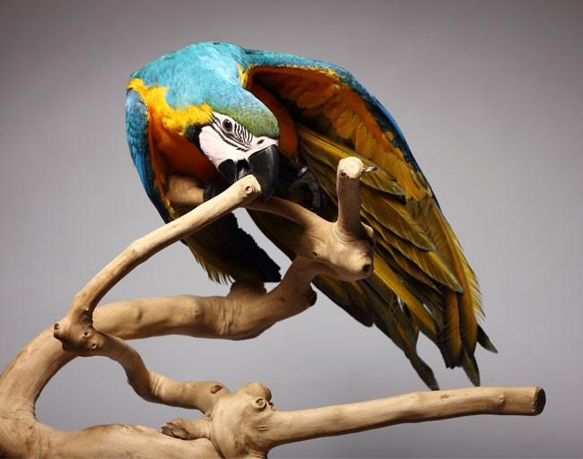 Vtáčie stromy